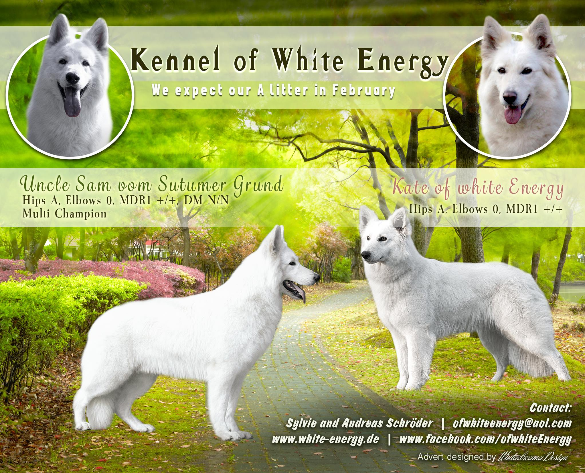White Shepherd Puppies From Germany White Alsatian White Swiss